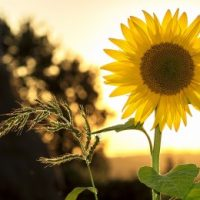 4 Ideas for Summertime Self-Care